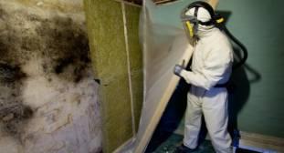 Skimmelsvamp påvirker helbredet